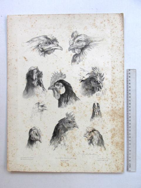 ליטוגרפיה, ראשי תרנגולים