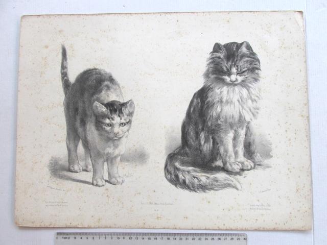 ליטוגרפיה, שני חתולים, חלודה