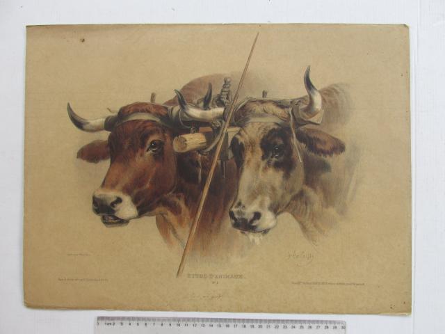 ליטוגרפיה עם אקוורל, פרות, חלודה