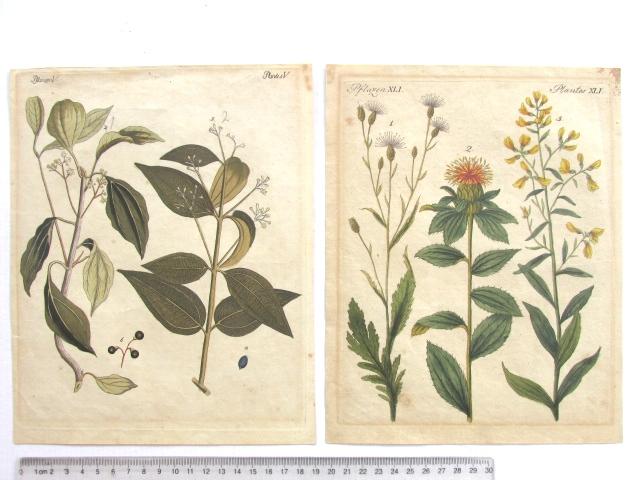 שני תחריטי נחושת עתיקים צבועים באקוורל צמחים